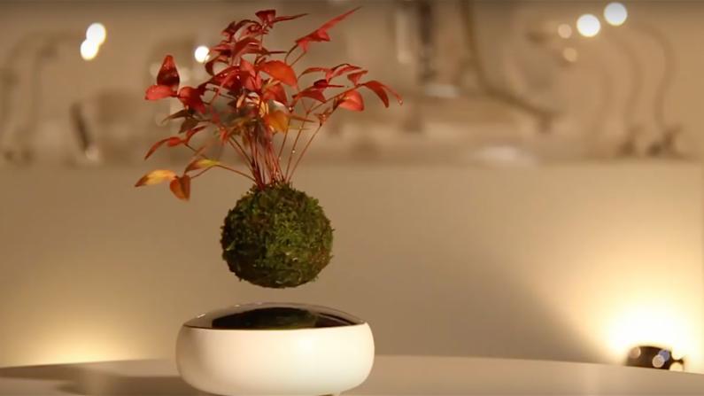 ¡Estas plantas mágicas de bonsai flotan y giran en el aire!