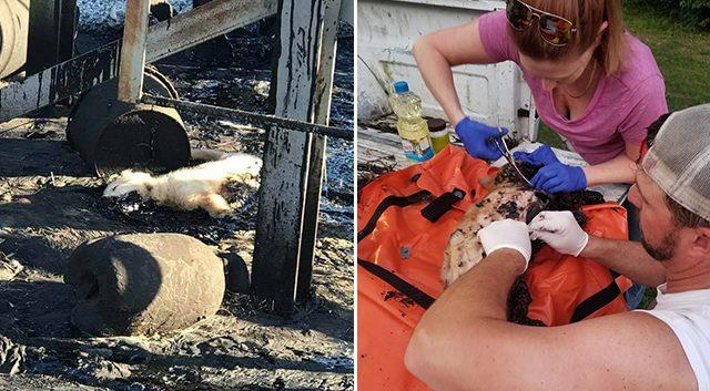 Cachorro cayó en un pozo de alquitrán: mira su rescate