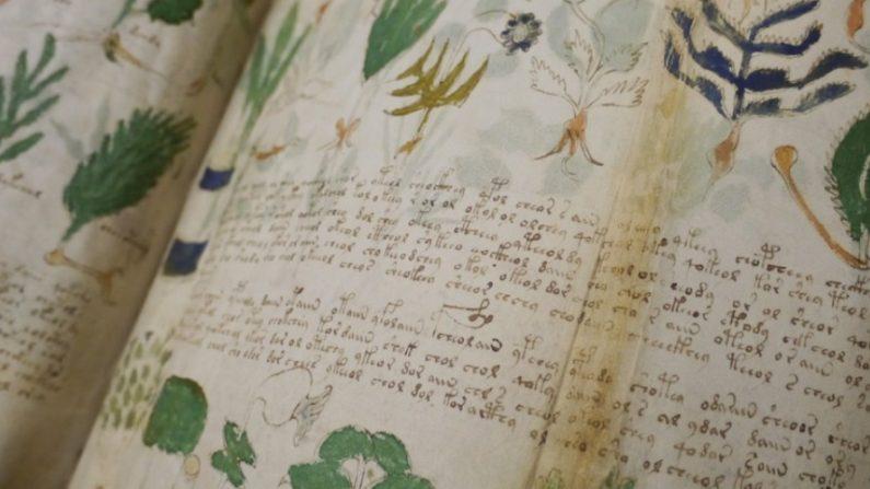 Numerosos estudios del extraño manuscrito Voynich buscaron desde que fue descubierto en 1912 descifrar y conocer sus misterios. El ejemplar se encuentra en la Universidad de Yale en la sección de libros raros. (Wikimedia Commons-Universidad de Yale)