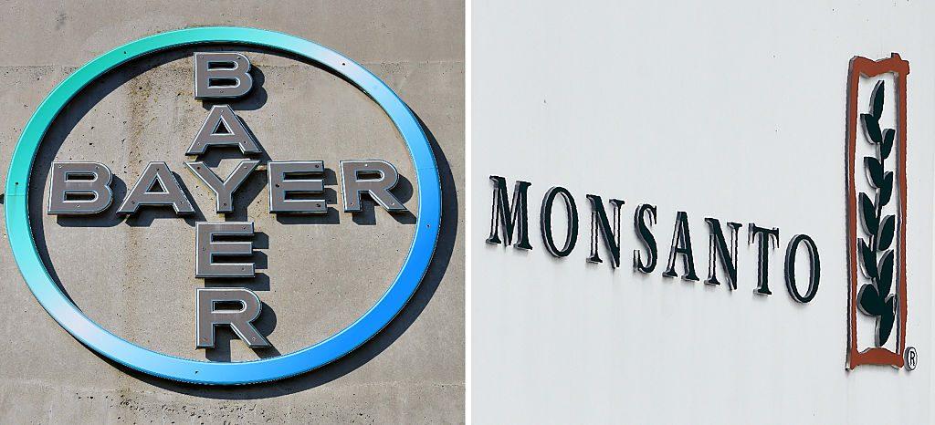 (COMBO) Esta combinación de imágenes de archivo creada el 14 de septiembre de 2016 muestra el logotipo del gigante farmacéutico alemán Bayer (el 8 de septiembre de 2016 en Leverkusen) y el logotipo de Monsanto en su fábrica belga y centro de operaciones el 24 de mayo de 2016 en Lillo cerca de Amberes. (PATRIK STOLLARZ, JOHN THYS/AFP/Imágenes Getty)