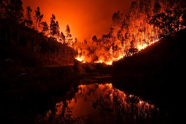 Decenas de víctimas fatales en incendio forestal en Portugal