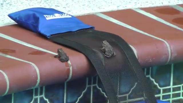 Biólogo ve que los animales se ahogan en las piscinas, así que inventó un dispositivo para salvarlos. (FrogLog)