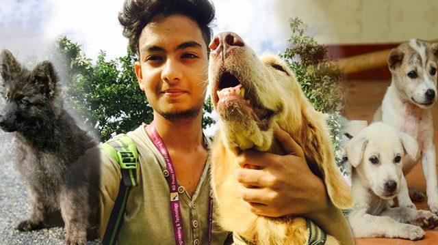 La pérdida de su mascota lo llevó a salvar a más 500 animales abandonados y maltratados