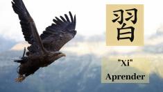 """Aprendiendo chino: Xi 習, el caracter para """"Aprender"""", como un halcón practicando el vuelo"""