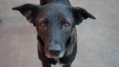 Perrita se niega a ser rescatada porque no quiere dejar a su cachorro atrapado bajo los escombros