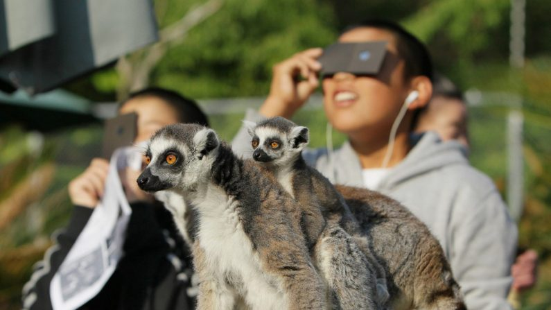 Los animales cambian su comportamiento cuando de pronto el día se vuelve oscuro. (JIJI PRESS/AFP/GettyImages)
