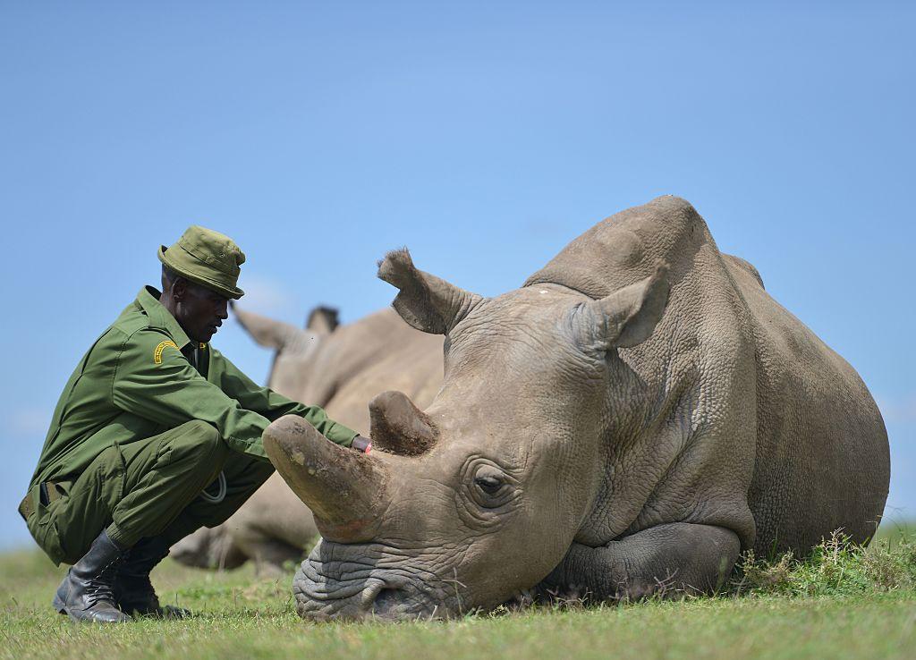 Conoce el mejor lugar del mundo para avistar rinocerontes, antes de que se extingan