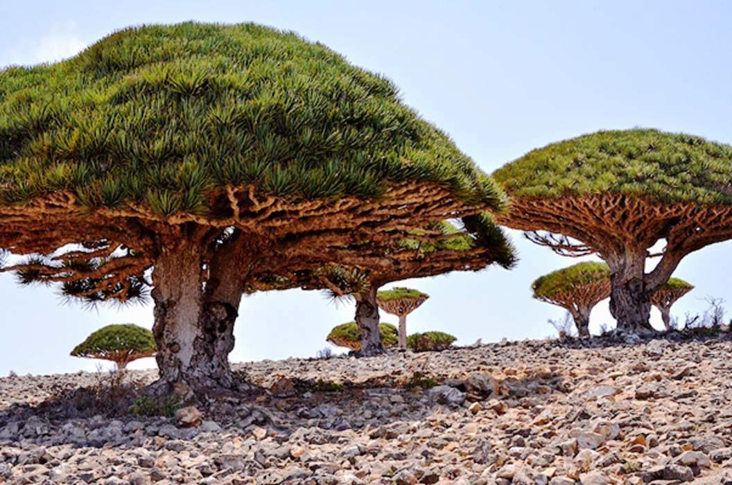 El mundo perdido de Socotora: un paisaje alienígena en la Tierra