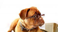 5 interesantes datos científicos sobre los perros que tal vez desconoces