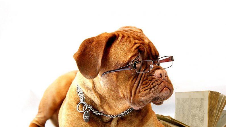 Diversos estudios científicos han comprobado cosas increíbles acerca de los perros. Aquí algunos de los datos que tal vez no sabías o no estabas seguro acerca de ellos. (Pixabay)