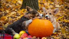 3 razones por las que deberías agregar calabaza a la dieta de tus mascotas