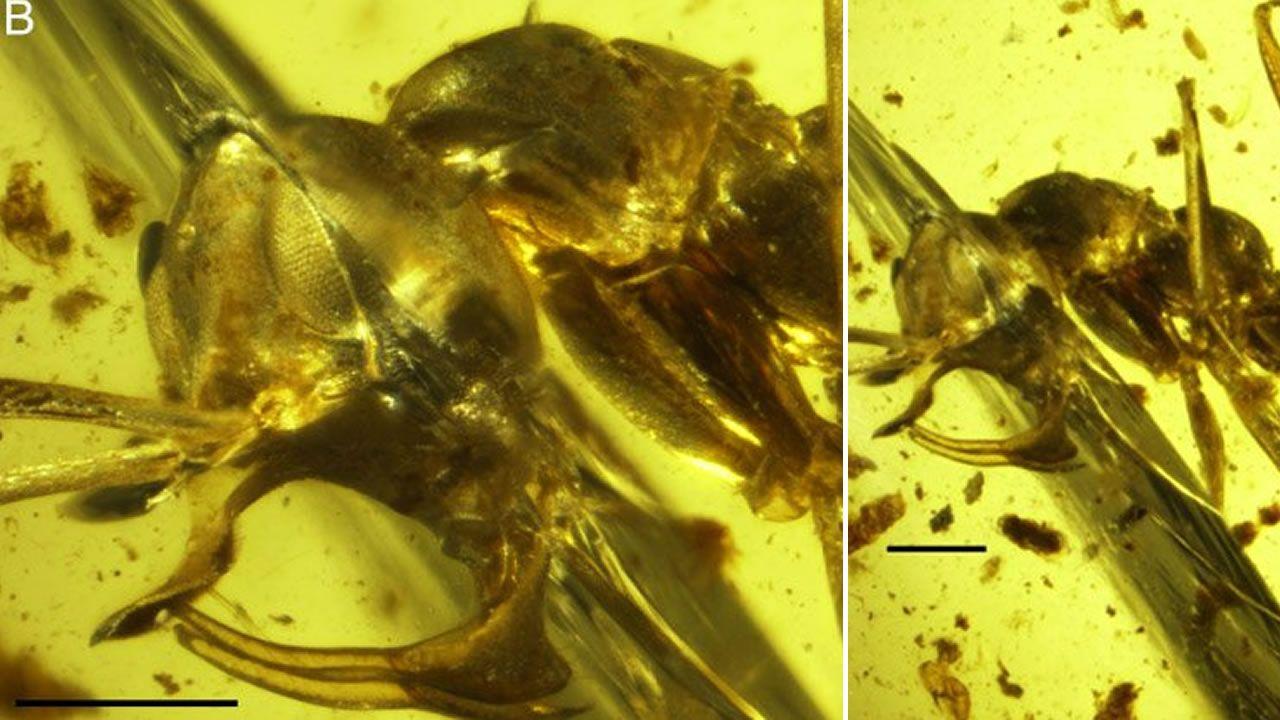 """Descubren a una """"hormiga del infierno"""" con estructuras metálicas en su cabeza"""