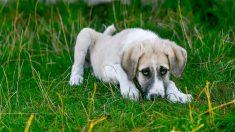 Sin pollito ni parque: perrito hizo algo que no debía y su carita de 'yo no fui' se hizo viral