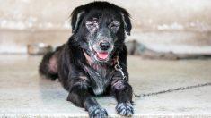 Perrito alérgico a los humanos puede recibir amor gracias a un tratamiento que eliminó su sufrimiento