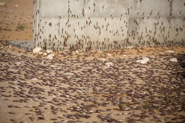 """""""Armagedón ecológico"""" es inminente, advierten científicos"""