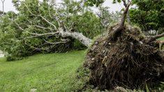 Restos de adolescente de 1000 años se desentierran con la caída de un árbol, su muerte fue terrible