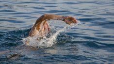 Sintió que algo rozó su pierna mientras nadaba y comenzó a gritar cuando vio a un bebé flotando