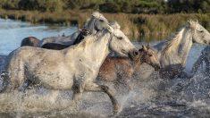 6 mujeres arriesgaron su vida para salvar a 100 caballos que se ahogaban durante una inundación
