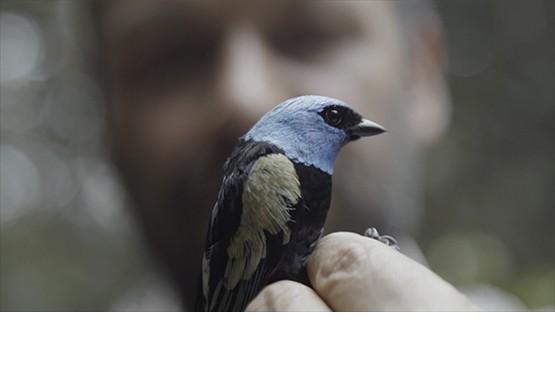 El repliegue de las FARC permite descubrir casi 50 nuevas especies en la selva