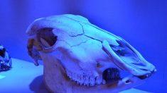 Más de 100 caballos sepultados y artefactos de 2400 años revelan la vida de la nobleza china