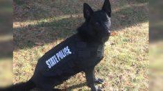 Policía pide a criminal que se rinda, pero se niega; así que le lanzan a Tanque el perro policía