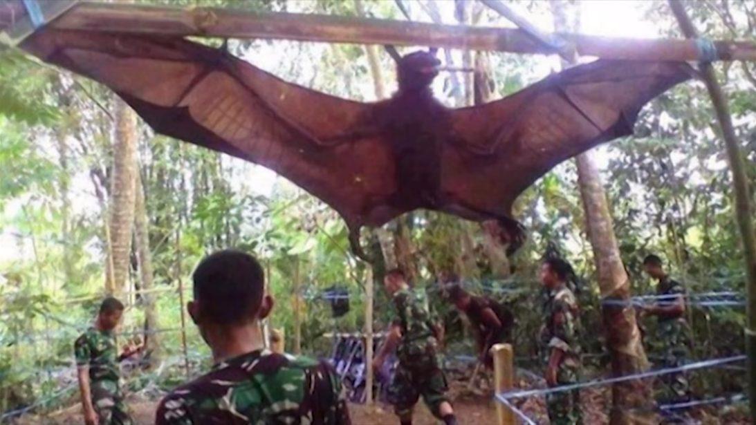 Mira el enorme murciélago de casi 2 metros capturado en Filipinas
