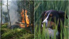 Perrita se salva de feroz incendio por su denso pelaje y sus dueños la encuentran cubierta de cenizas