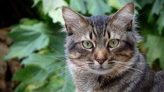 La dueña de esta gata murió y su leal felina no se apartó de su tumba por un año