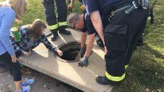 3 perros cayeron a un drenaje luego de escapar de casa, ¡su travesura movilizó policías y rescatistas!