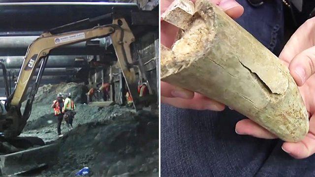 Mamut de la Edad de Hielo descubierto durante excavación del metro de Los Ángeles tendría 10 000 años