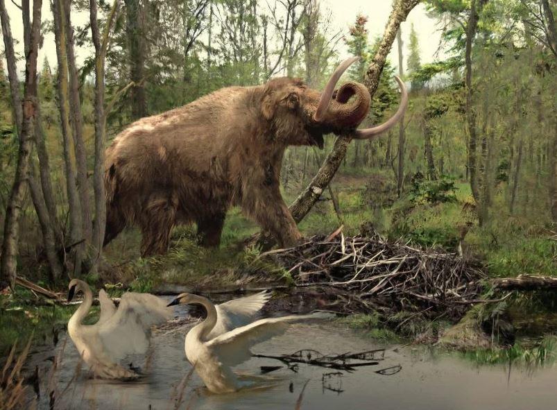 Cráneo de mamut del fin de la Edad de hielo es descubierto bajo un metro en Los Ángeles