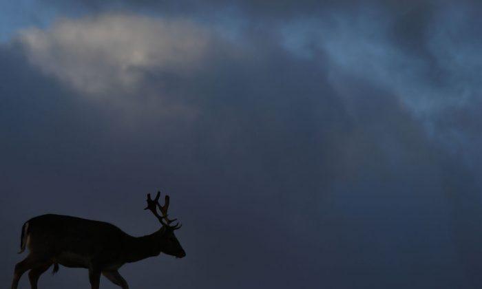 (Ben Stansall/AFP/Getty imágenes)