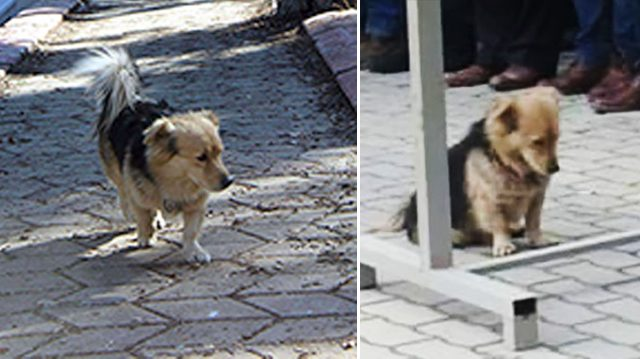 """Perro """"huye"""" de casa todos los días luego de triste pérdida; pero un día descubren la razón"""