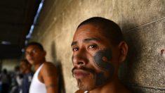 Arrestan dos líderes veteranos de la pandilla MS13 en El Salvador