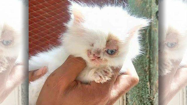 Gatita de un solo ojo vagaba huérfana por las calles. Después de su rescate ¡mira que linda se ve!
