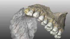 Historia de la humanidad moderna se reescribe al descubrir fósiles de 200.000 años en Israel