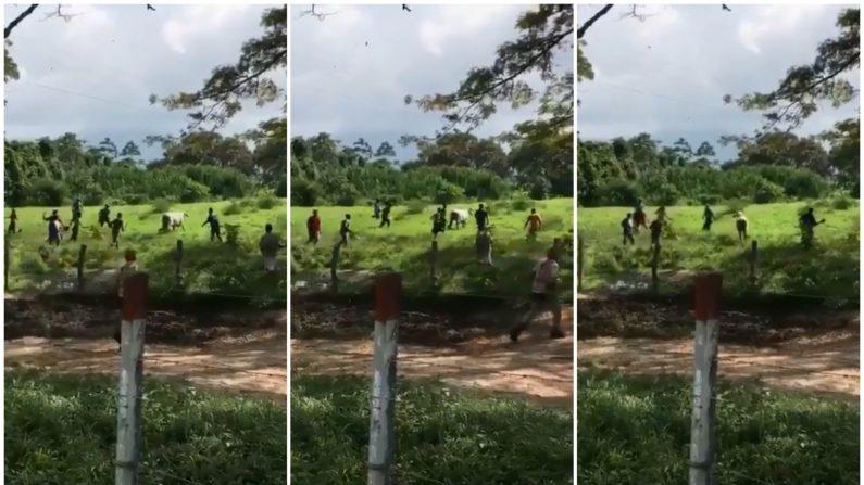 Gente desesperada en Venezuela mata a pedradas a una vaca para comérsela