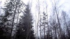 Extraño ruido espanta a visitantes de un bosque en Canadá (Vídeo)