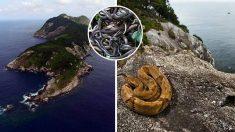 Esta isla en Brasil es cautivadora a la vista, ¡pero nadie se atreve a ir allí! Averigua por qué