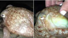 Desconcertados cuando decenas de pulpos salen del mar, pero a la mañana siguiente, es espeluznante
