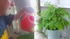 Riega plantas a pedido de esposa fallecida. Años después, se da cuenta que había una razón escondida