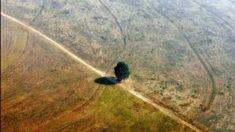 Deforestación en la Amazonia está por ser irreversible lo que afecta la Cuenca de la Plata