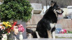 Muere el perro más fiel de Argentina: veló durante 10 años la tumba de su amo