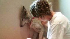 Perro lobo a punto de ser sacrificado en un refugio es rescatado y una amiga le devuelve la alegría