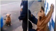 """Video de un policía que detiene y registra a un perro """"delincuente"""" causa risas"""