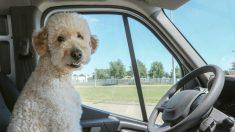 Cartero se hace amigo de los perros, les da besos, bocadillos ¡y no lo corren ni le ladran!