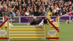 Los perros tienen sus propias olimpiadas en Nueva York