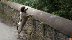 El misterioso puente de Escocia desde el que se suicidan los perros y nadie sabe por qué