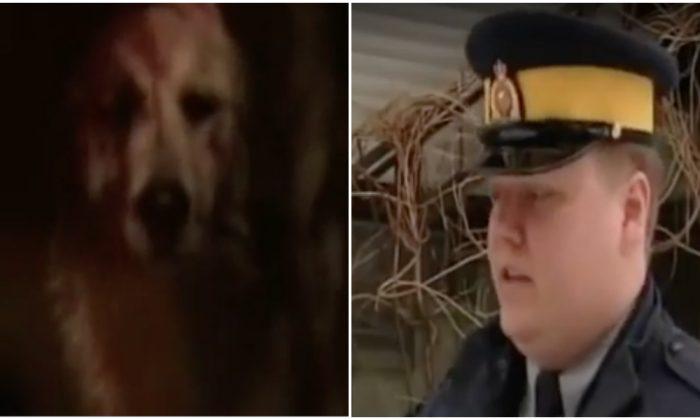 Un niño y su perra son atacados por un puma salvaje, pero cuando la policía llega, no pueden creerlo