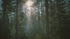 Cómo cura la naturaleza